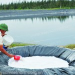 Cách quản lý ao tôm vào mùa mưa - 55d5ce56cd9c1 150x150