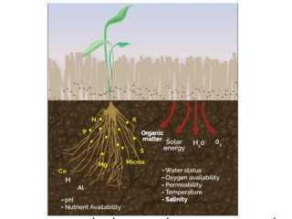 Cải tạo đất để nâng cao năng suất cây trồng - cai tao dat de nang cao nang suat cay trong