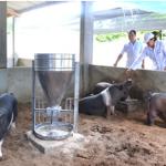 Kỹ thuật chăn nuôi lợn ( heo ) đen