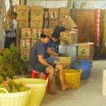 Làm giàu nhờ trồng sầu riêng - sau rieng 150x150