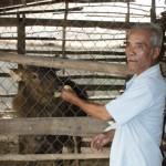 Trồng cỏ nuôi nai – mô hình hiệu quả