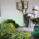 40% nông dân sử dụng thuốc BVTV sai cách - 1448593173 su dung thuoc bvtv sai cach hinh anh 150x150
