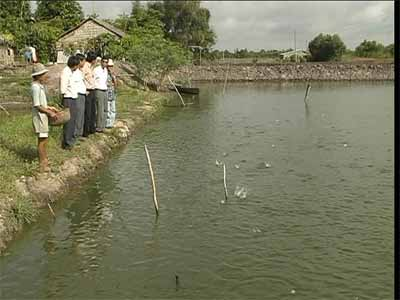 Ao cá của anh Nguyễn Văn Quốc.