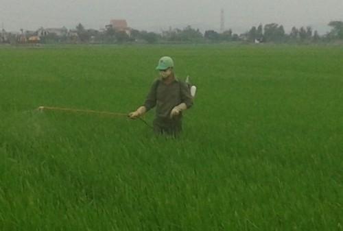 Nông dân thuốc BVTV cho cây trồng