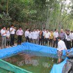 Kỹ thuật nuôi Lươn trên bể lót bạt - ky thuat nuoi luon tren be lot bat 150x150