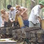 Hướng dẫn nuôi ong căn bản - mat ong1 150x150