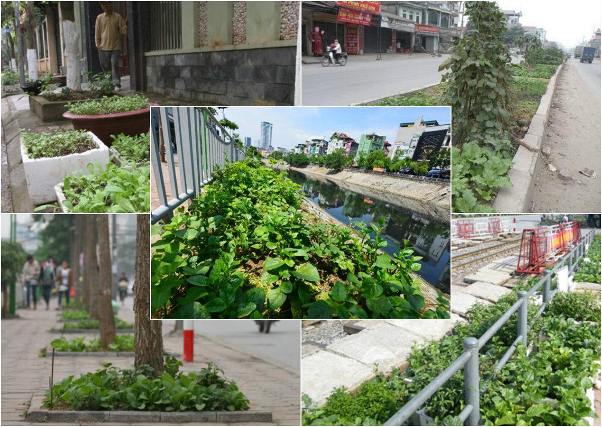 Muôn kiểu trồng rau của dân hà thành - 1434167735 mlzmcollage xtoq 1