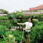 Vườn rau sạch siêu đẹp trên sân thượng để cả nhà cùng chăm - 1436839339 edru11390048 979240025422550 2674536784350550444 n iaia 150x150
