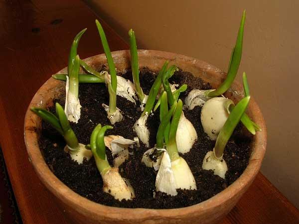 3 loại gia vị thiết yếu bạn nên tự trồng ngay hôm nay - 1459238502 1443599498 123