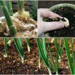 3 loại gia vị thiết yếu bạn nên tự trồng ngay hôm nay - 1459410289 collagef 150x150
