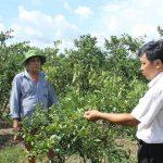 Cách hạn chế tác hại của mặn đến cây ăn quả