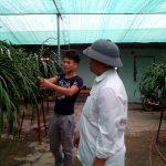 Mô hình trồng hoa Địa Lan cho thu nhập cao - 3333 1 150x150
