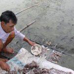 Làm giàu nhờ sản xuất cá lóc giống - caloc 150x150