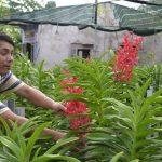 """Người nông dân có thu nhập """"khủng"""" từ việc trồng hoa lan Mokara - lamgiau 150x150"""