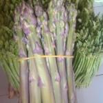 Kỹ thuật trồng măng tây tím - san pham mang tay tim 150x150