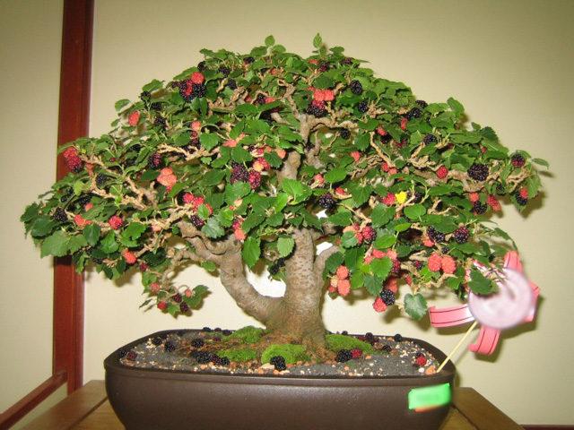 Trồng cây ăn quả trong chậu - trong cay an qua trong chau 1 640x480