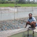 Mô hình nuôi ếch bằng lồng lưới, kết hợp nuôi cá đem lại hiệu quả