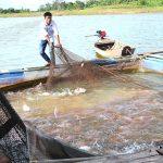 Bình Thuận: Giải pháp nuôi cá lồng bè mùa nóng