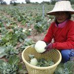 Trái cây Thái Lan chứa chất độc hại - 1720313 150x150