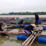 Kiểm soát độ đục, độ trong nước ao nuôi thủy sản