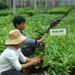Kỹ thuật trồng một số cây lâm sản ngoài gỗ