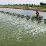 Một số biện pháp xử lý nước và kỹ thuật ương nuôi tôm giống tại vùng Nam Bộ - 5 150x150