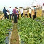 Kinh nghiệm trồng dưa, bí bò đất