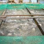 Quy trình kỹ thuật nuôi cá thát lát cườm trong lồng