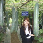 Chăm sóc cây bí xanh bằng phân đa yếu tố Văn Điển - 560a16947fb96 150x150