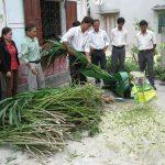 Tận dụng phụ phẩm nông nghiệp làm thức ăn cho Bò