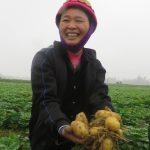 Mô hình trồng khoai tây che phủ xác thực vật - 56a86fb02c4f3 150x150