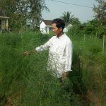 Cách trồng măng tây trên đất cát - 56c53beb5efed 150x150