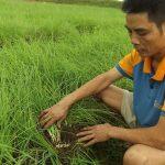 Mô hình và kỹ thuật trồng hành tăm trên lưới cho năng suất cao - 56cc134feb960 150x150