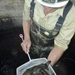 Sinh sản nhân tạo thành công cá chạch sông - 56e9055c7b4a7 150x150