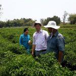 Mô hình trồng ớt Tiela - 570356d71b338 150x150