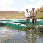 Kỹ thuật, kinh nghiệm nuôi cá tầm - 570615b100539 150x150