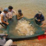 Các mô hình nuôi thủy sản thích ứng xâm nhập mặn - 57148f96796a7 150x150