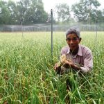 Quảng Ngãi: Mô hình trồng tỏi trên cát hiệu quả cao - 5714a2e34c35f 150x150