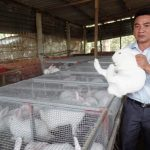 Kỹ sư cơ khí nuôi thỏ lai