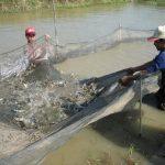 Giải pháp nuôi thủy sản thích ứng hạn, mặn - 572212147244e 150x150