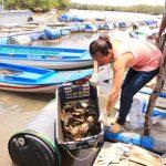 Đồng Nai: Rộ phong trào nuôi hàu nước lợ