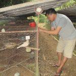 Thái Nguyên: Làm giàu từ mô hình nuôi chim cu gáy - 5733db8ca7c61 150x150
