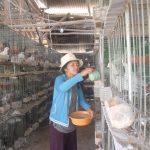 Kinh nghiệm nâng cao hiệu quả nuôi bồ câu Pháp - 57352c30048e9 150x150