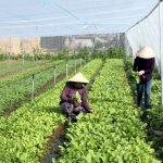 Mô hình trồng rau sạch trong nhà lưới - 57468e8eb71a8 150x150