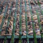 Kỹ thuật nuôi lươn không bùn đơn giản, tiết kiệm