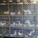 Kỹ thuật nuôi chim bồ câu Pháp theo hướng nuôi nhốt - bo cau2 pohm 150x150