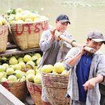 Xây dựng thương hiệu quốc tế cho siêu trái - buoi da xanh 1462325378 150x150