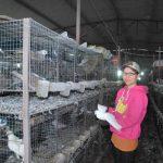 Cử nhân ngoại ngữ lập nghiệp với nghề nuôi bồ câu Pháp - chi nhung 2843 1394102665 150x150
