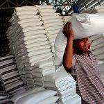 Người trồng lúa cả nước đang nín thở chờ tín hiệu mới