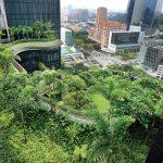 Giải pháp thoát nước cho vườn trên sân thượng